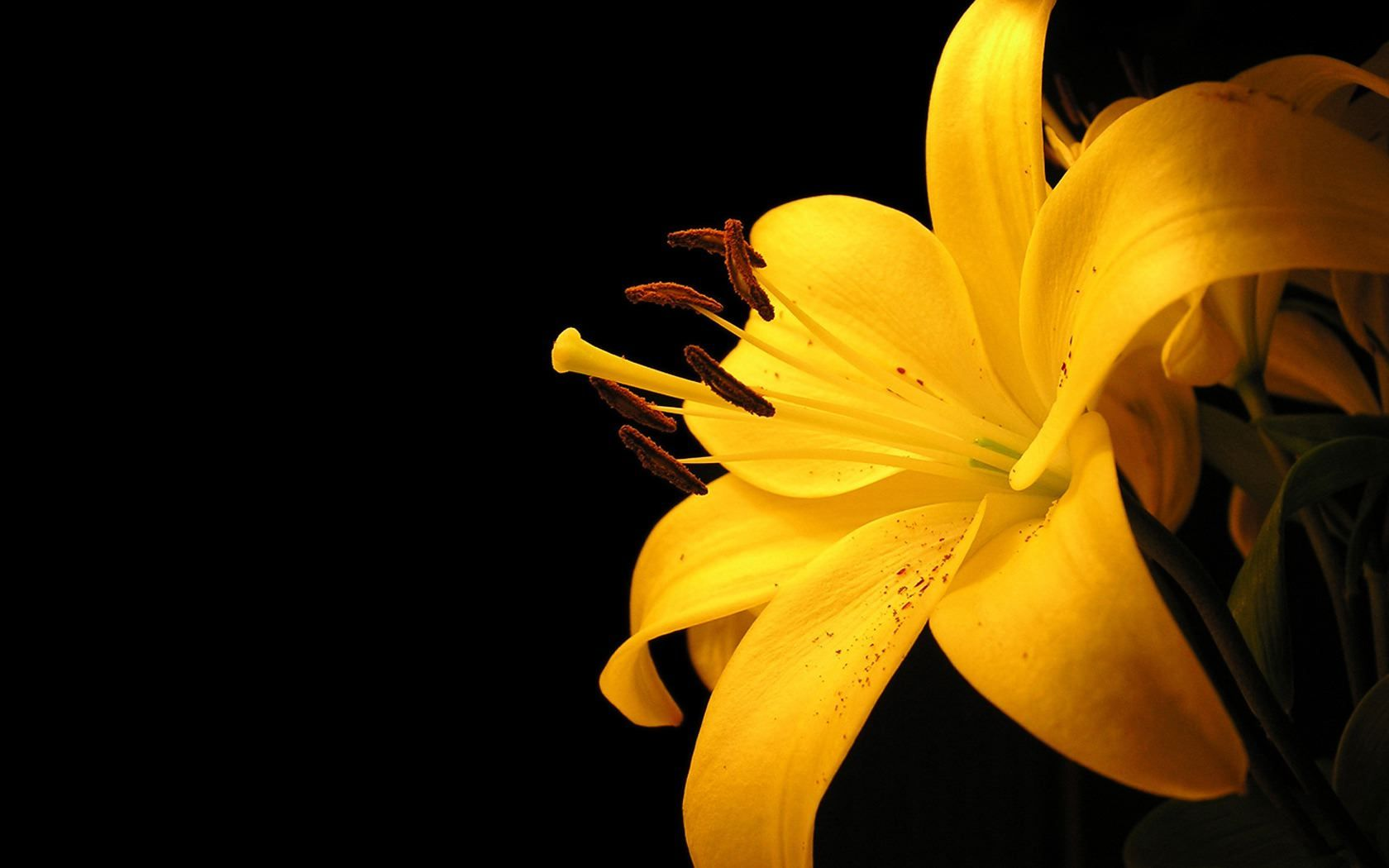 yellow color flowers wallpapers