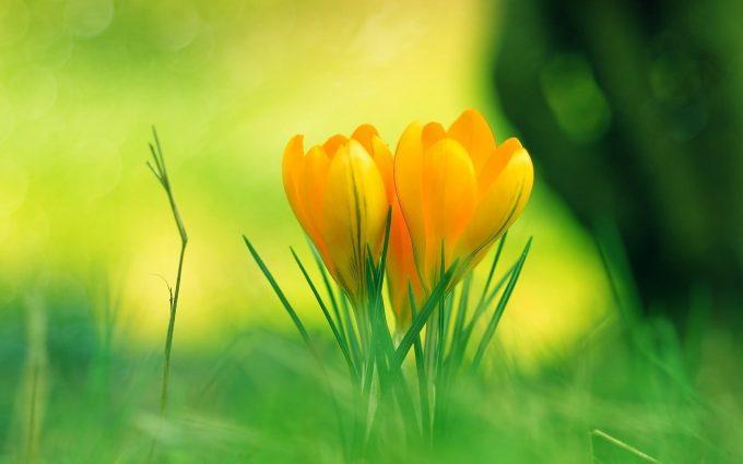 yellow flower A3