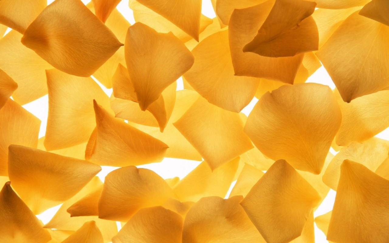 yellow flower A4