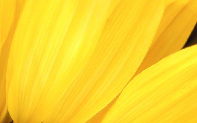 yellow flower A5