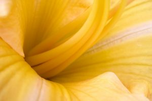 yellow flower wallpaper A1