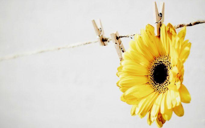 yellow flower wallpaper A18