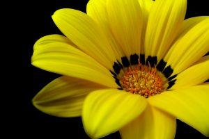 yellow flower wallpaper A8