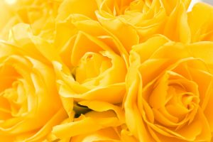 yellow hd