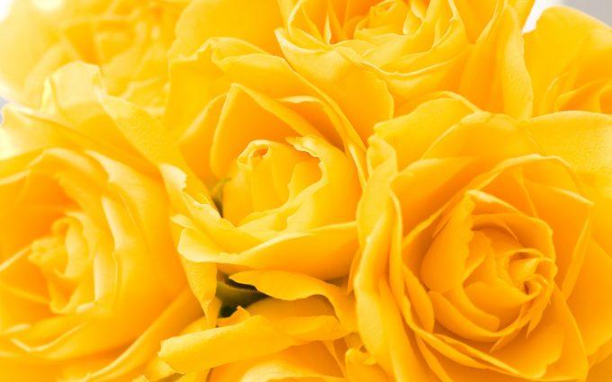 yellow hd