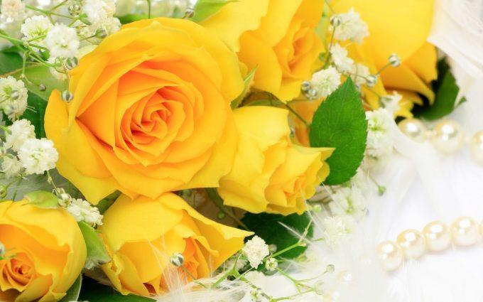 yellow rose wallpaper beautiful