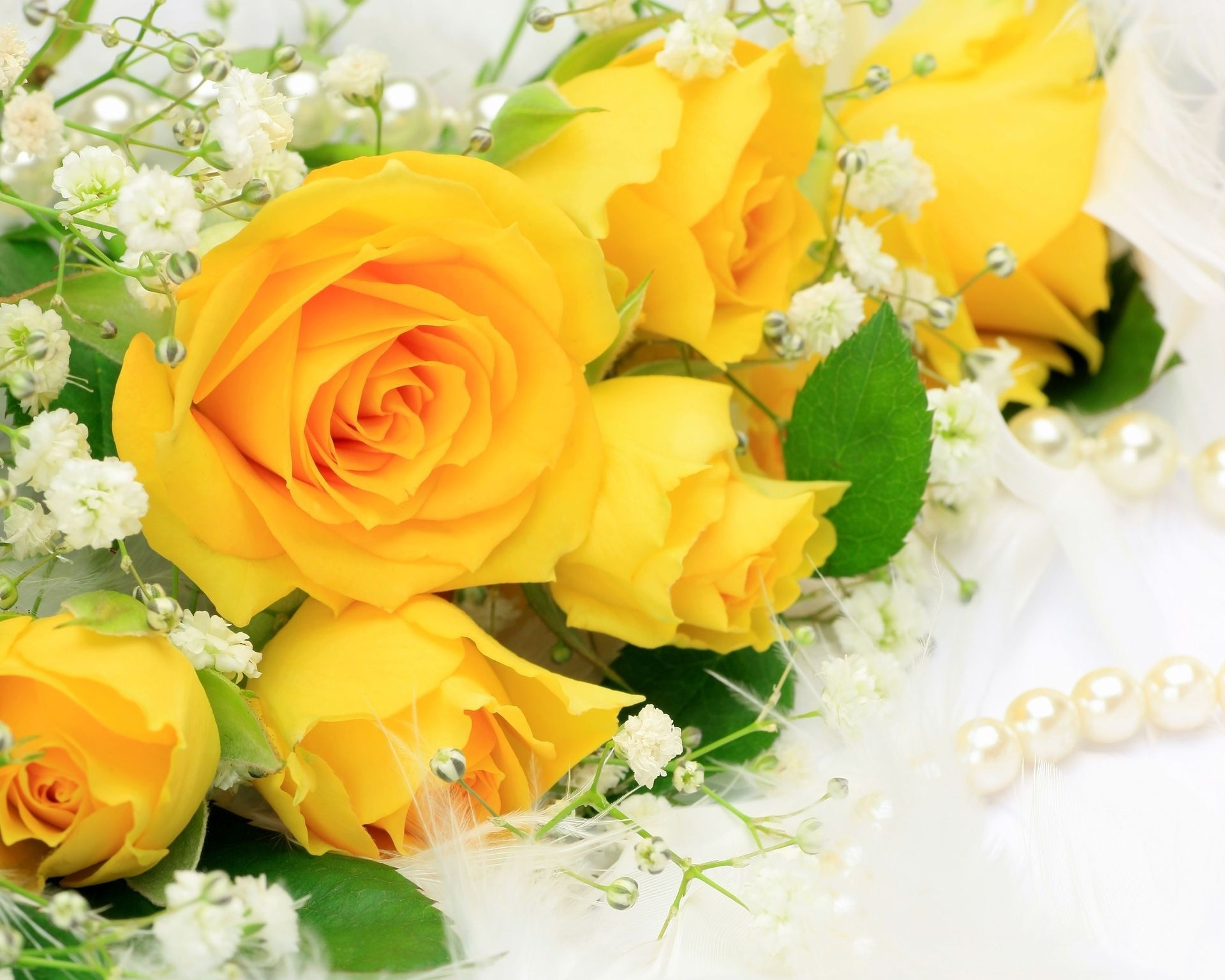 yellow rose wallpaper beautiful
