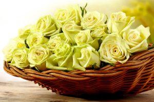 yellow rose wallpaper cute A2