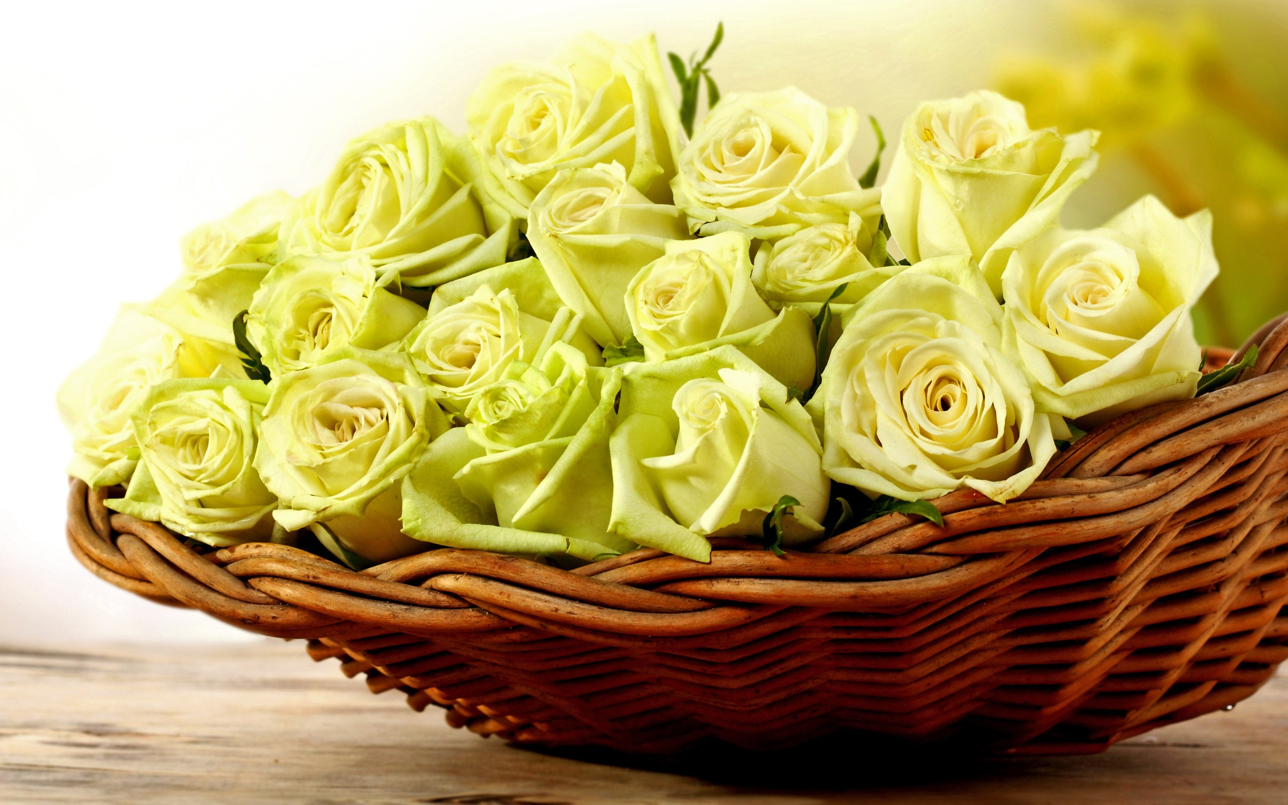 yellow rose wallpaper cute A2