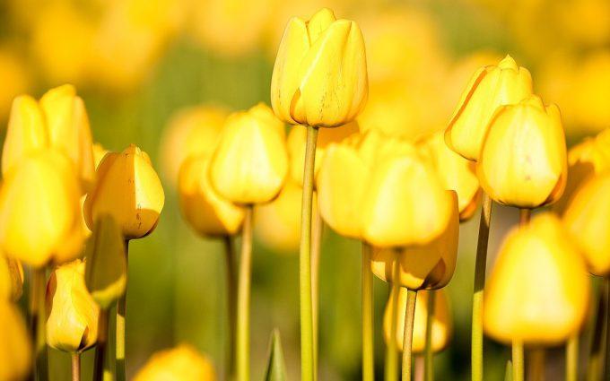 yellow wallpaper A3