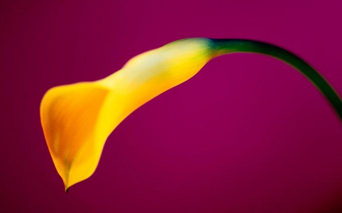 yellow wallpaper nature
