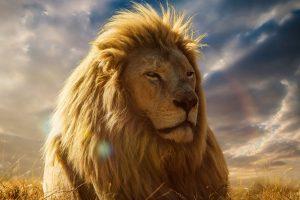 lion wallpaper king hd 4k