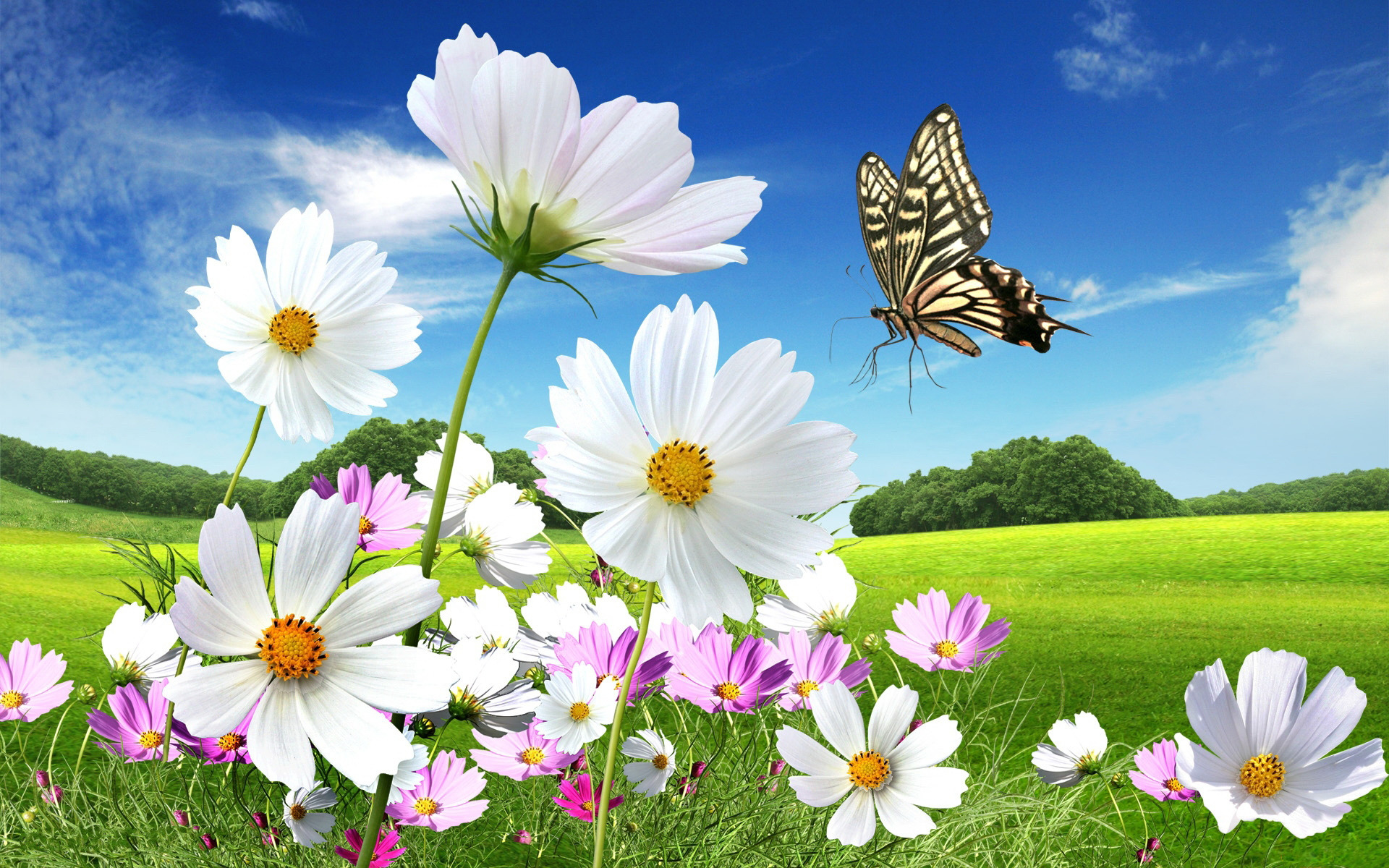 3d butterfly wallpaper free