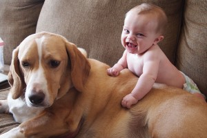 Baby Wallpapers dog