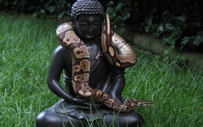 Buddha Wallpaper pictures HD snake