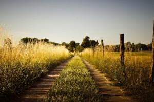 country wallpaper farm road