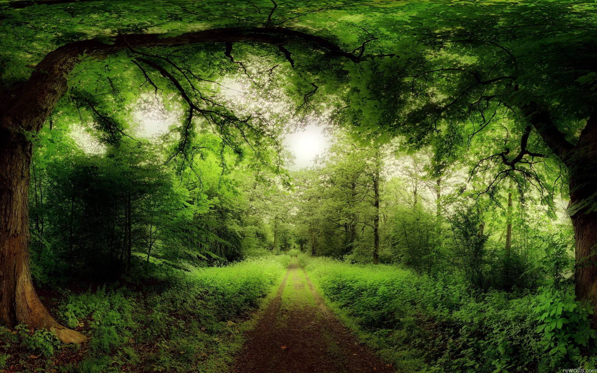 Forest Wallpapers HD amazon path
