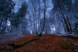 Forest Wallpapers HD snow