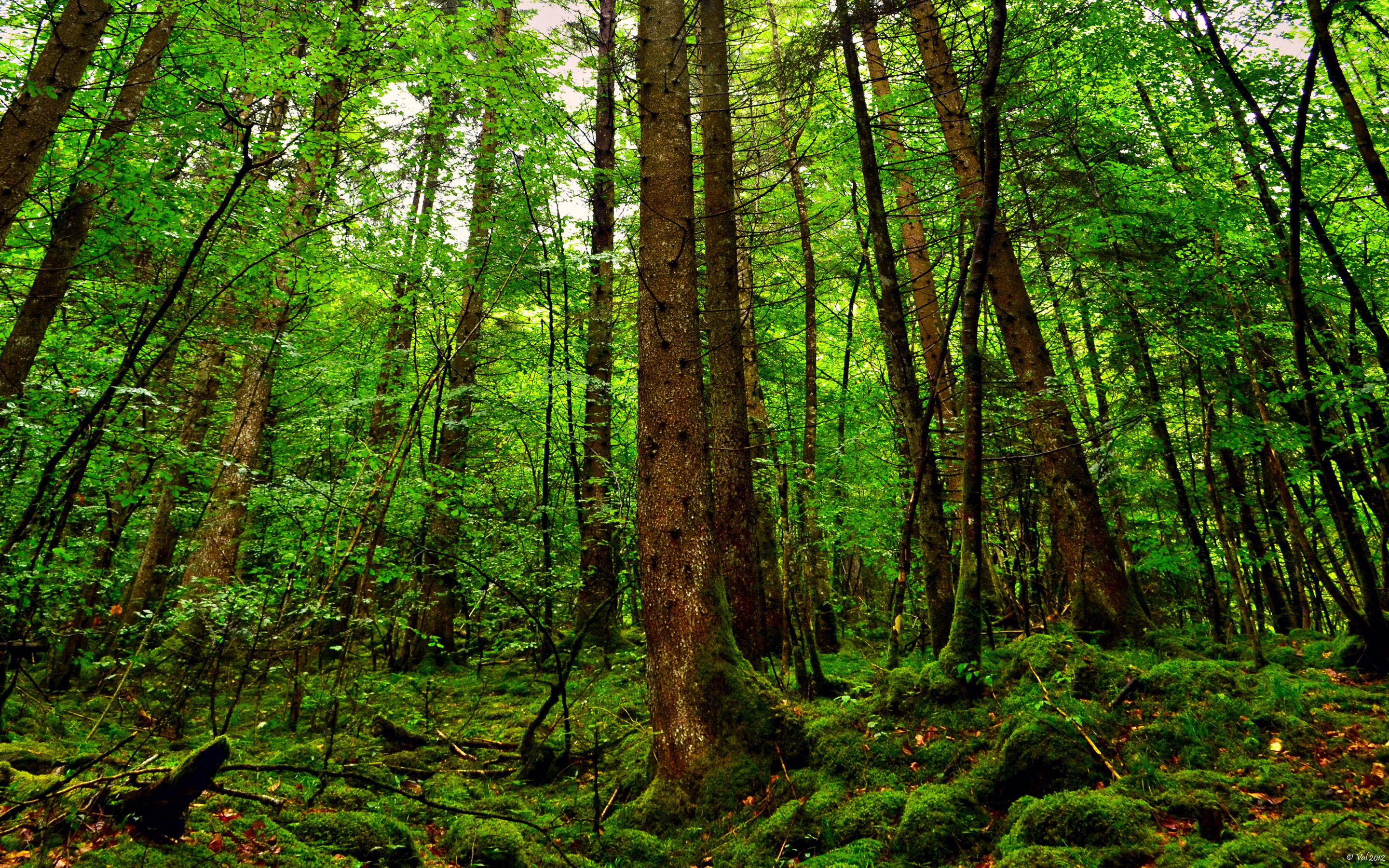 Forest Wallpapers HD green trees