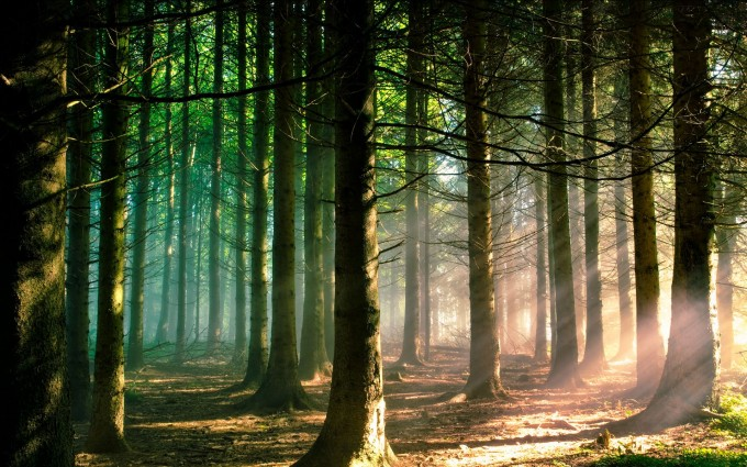 Forest Wallpapers HD trees sunshine