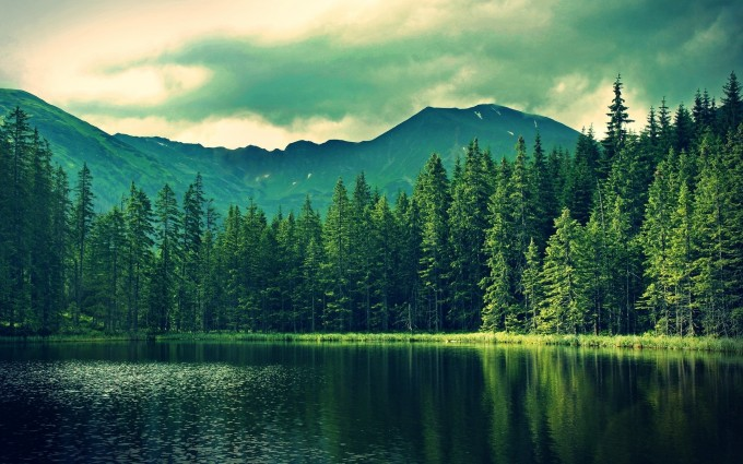 Forest Wallpapers HD mountains