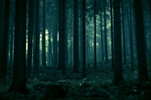 Forest Wallpapers HD dark trees