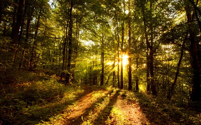 Forest Wallpapers HD sunshine