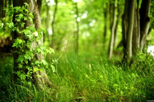 Forest Wallpapers HD leaves