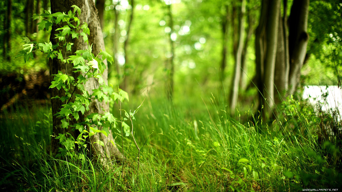 Forest Wallpapers HD A37