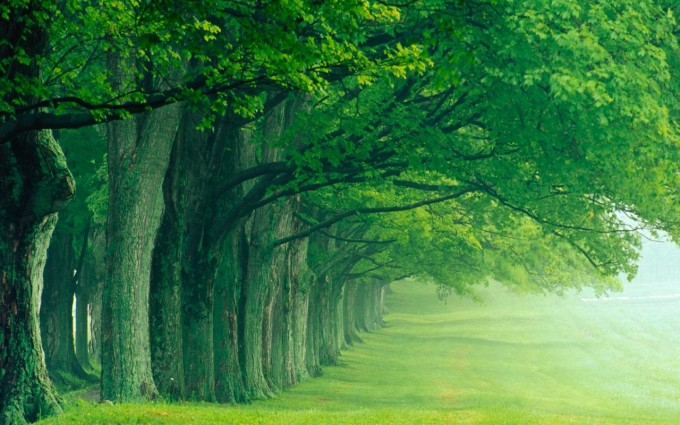 Forest Wallpapers HD beautiful