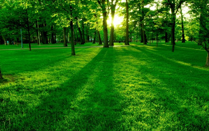 Forest Wallpapers HD grass