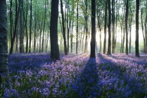 Forest Wallpapers HD purple flowers