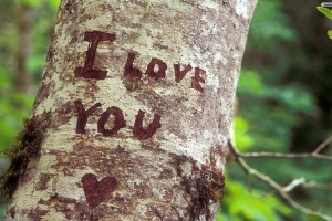 I Love You Wallpapers tree