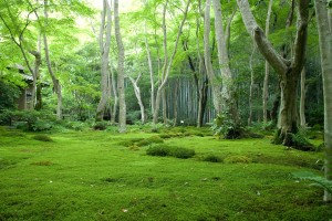 Jungle Wallpapers nature trees green