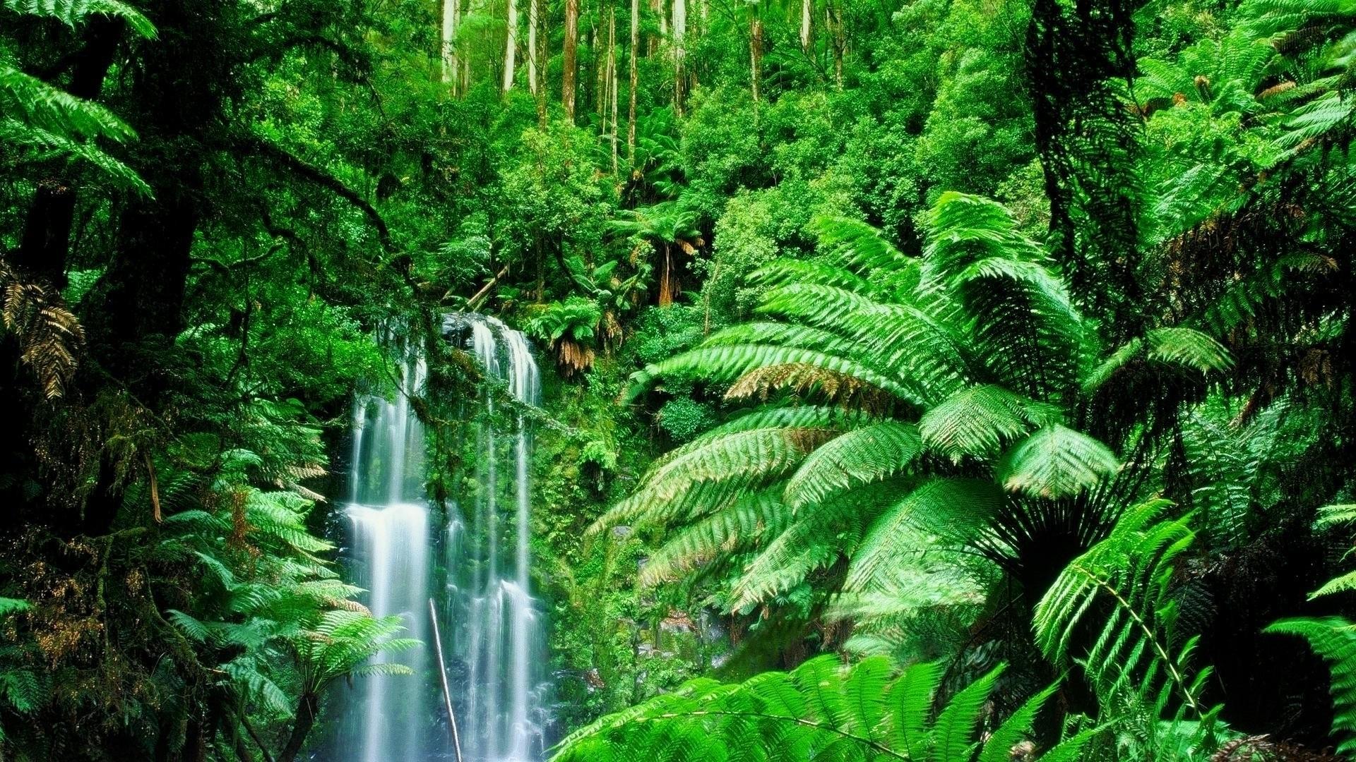 Jungle Wallpapers nature falls nice