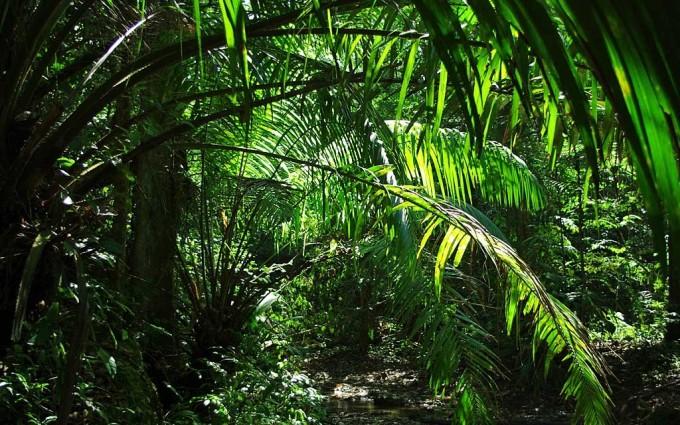 Jungle Wallpapers HD plants