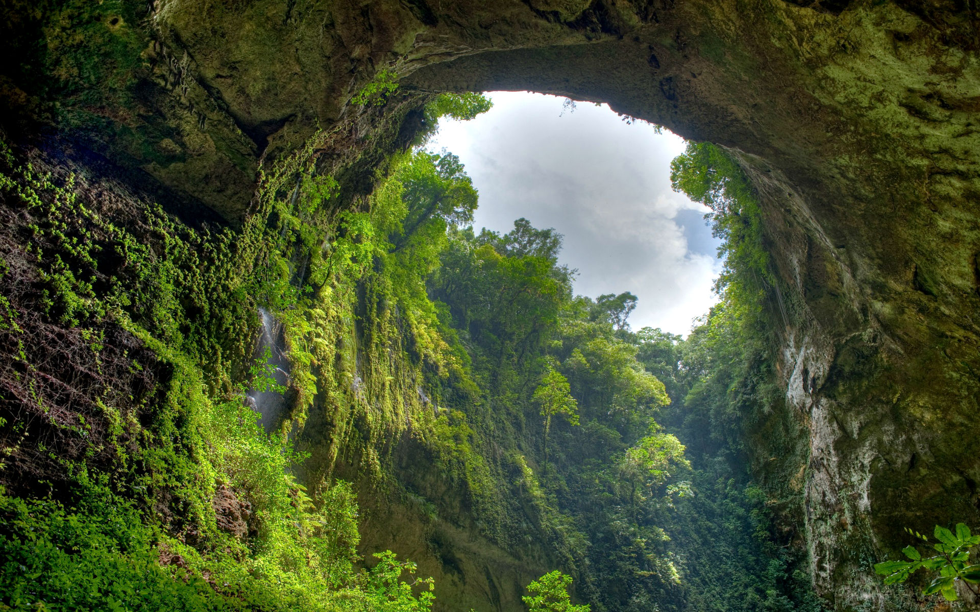 Jungle Wallpapers nature cave