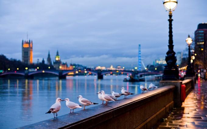 London Wallpapers HD seagull