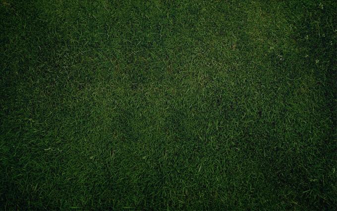 Plain Wallpapers HD green grass