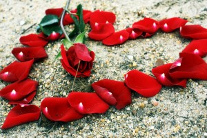 Red Roses Wallpapers HD A39 love rose