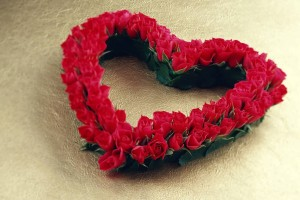 Red Roses Wallpapers HD A39 beautiful love