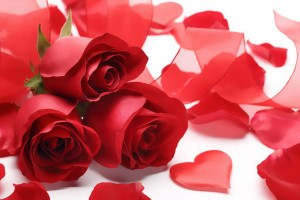 Red Roses Wallpapers HD A39 petals