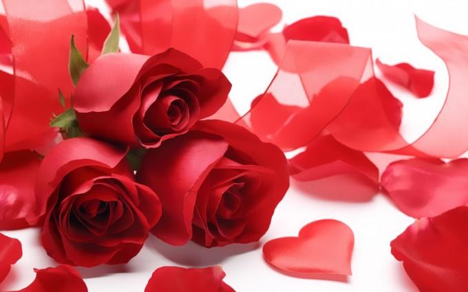 Red Roses Wallpapers HD A39 petals