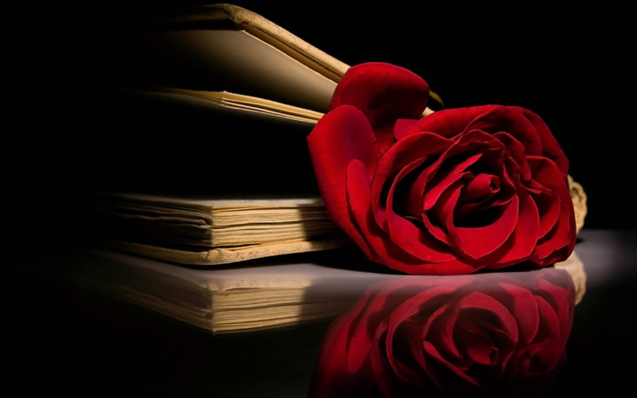 Red Roses Wallpapers HD A39 book