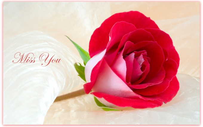 Red Roses Wallpapers HD A39 miss you