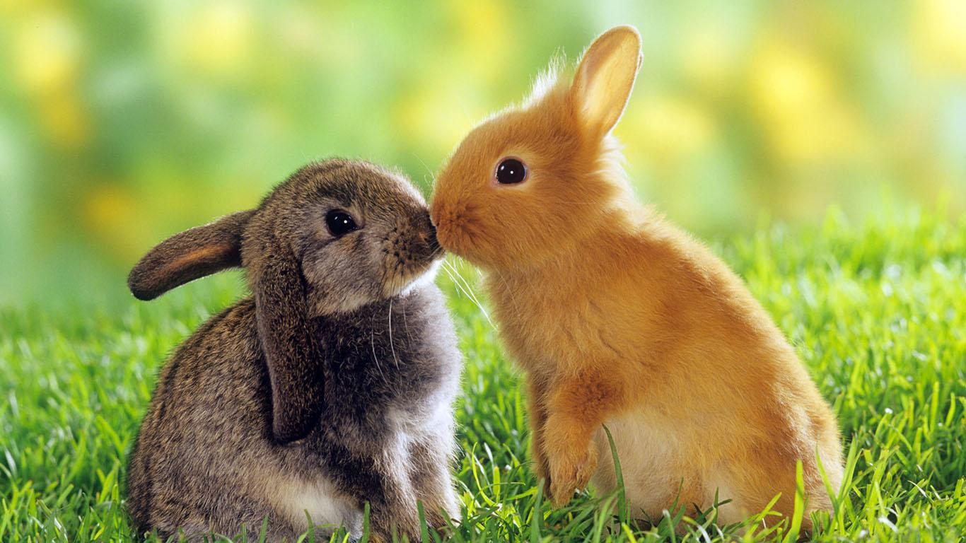 Romantic Wallpapers Rabbits Kidding HD A22 - Free Romantic Wallpapers, Romantic Couples, Romantic Love Wallpapers, Romantic Kiss Wallpapers, high definition desktop laptop mobile background Pictures images downloads.