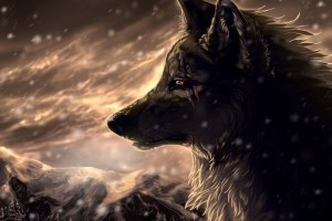 pictures of wolfs