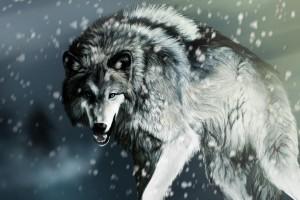 wolfs wallpaper