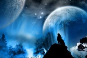 lone wolf wallpaper