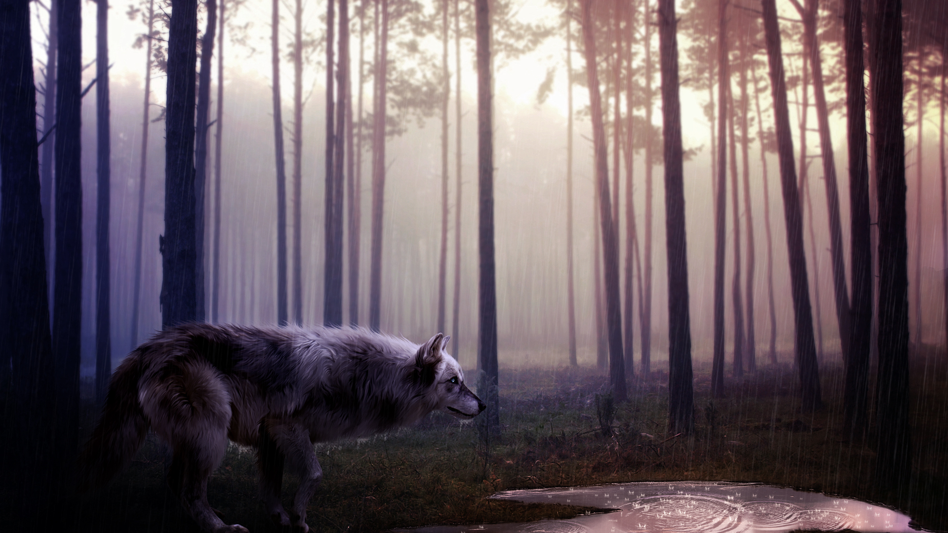 free wolf wallpapers